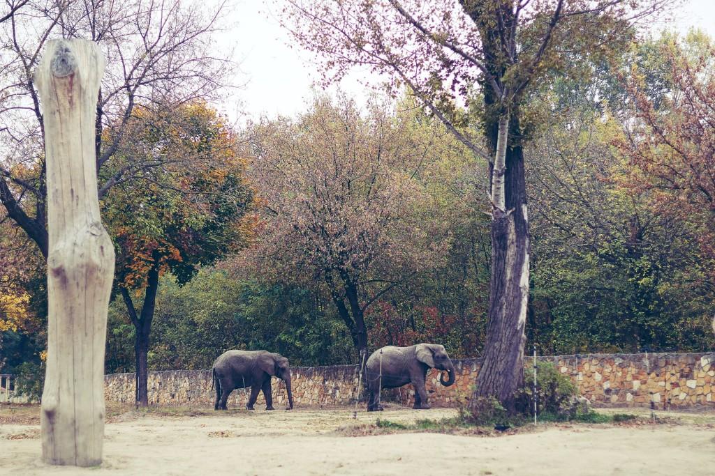 słonie, zoo