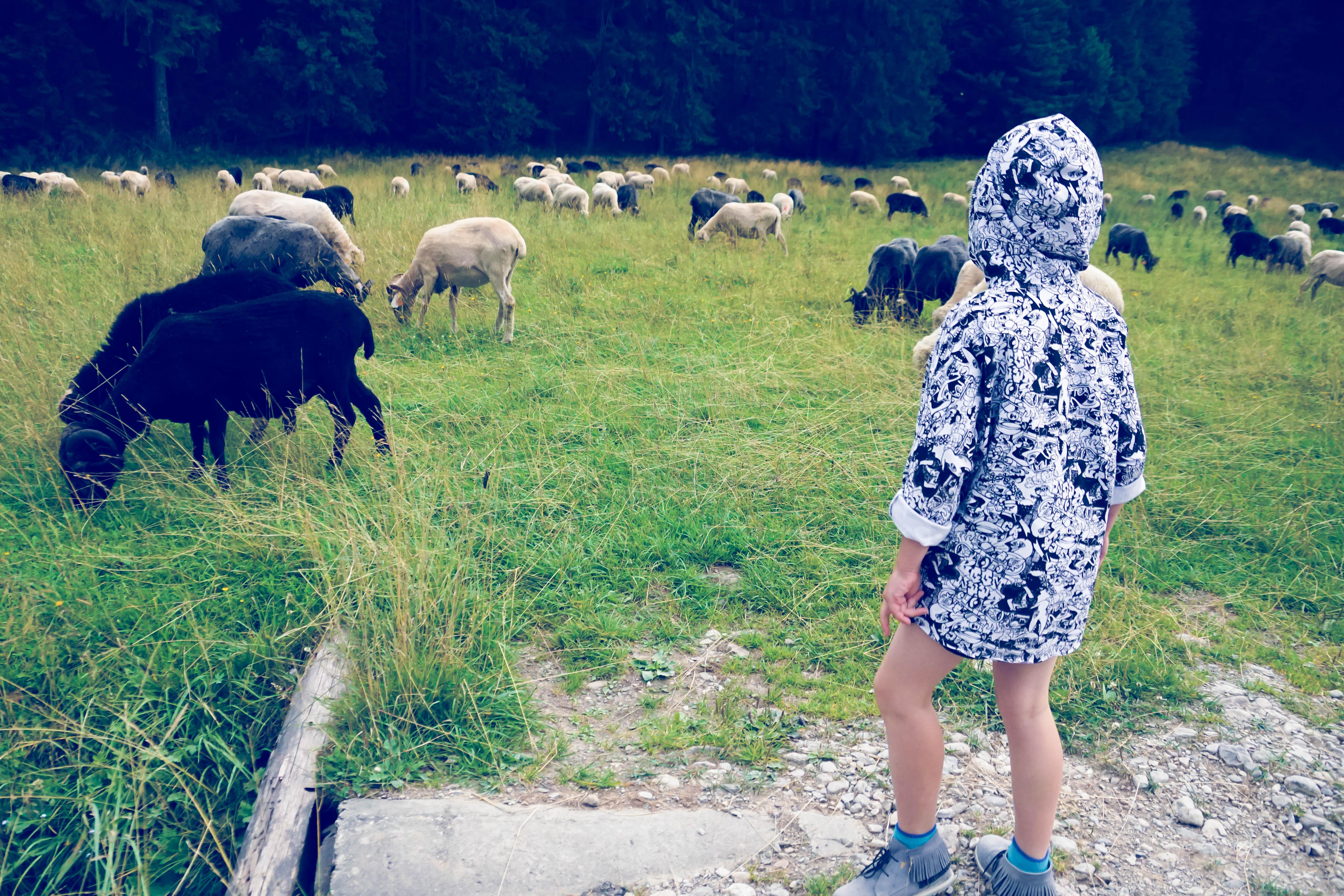 Dolina Kościeliska z dzieckiem i z wózkiem 06