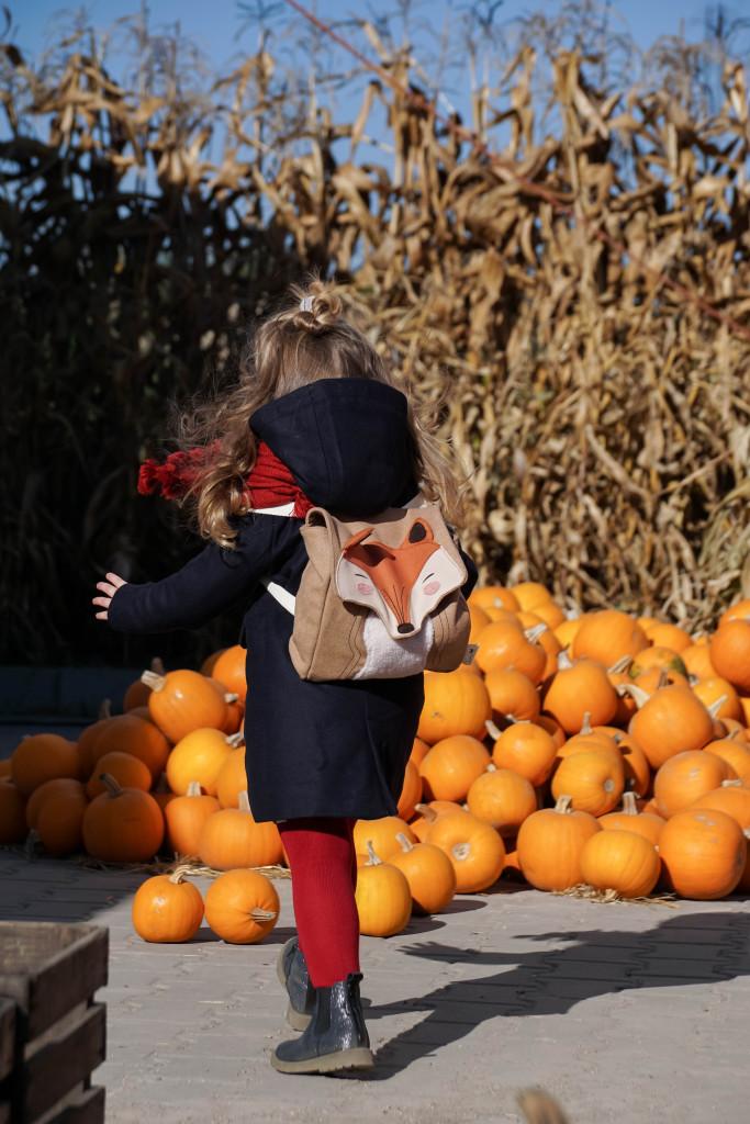 farma dyń powsin warszawa, pumpkin farm