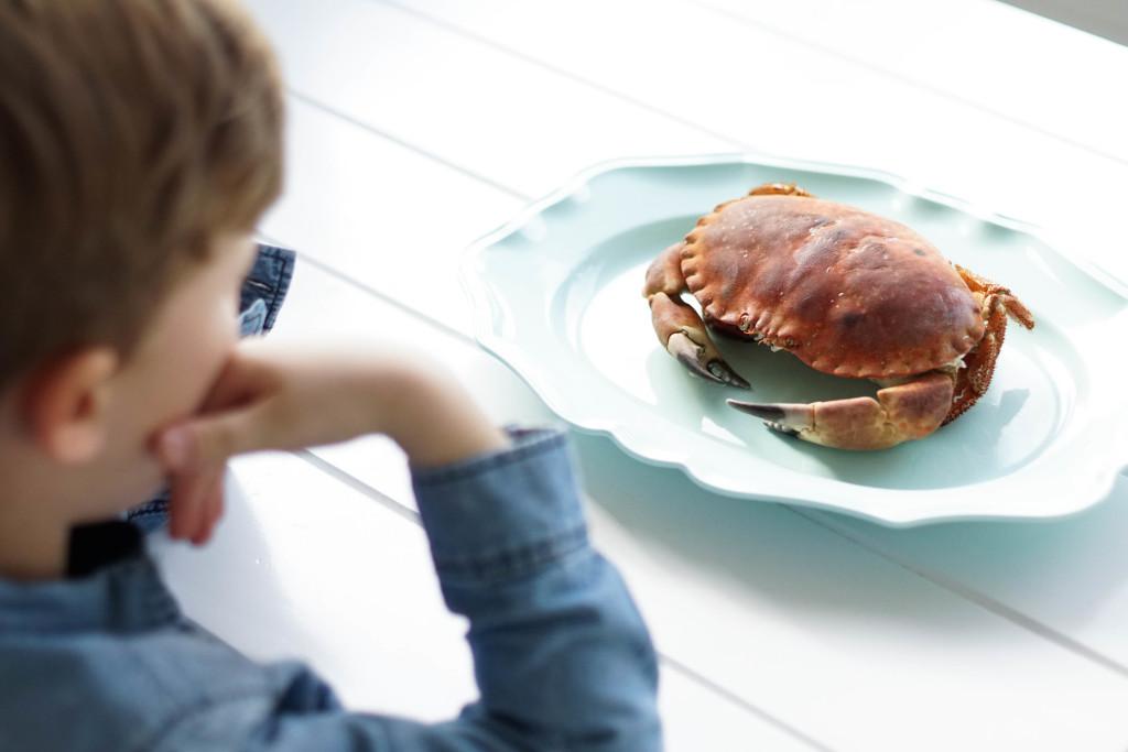 krab, jak przygotować kraba
