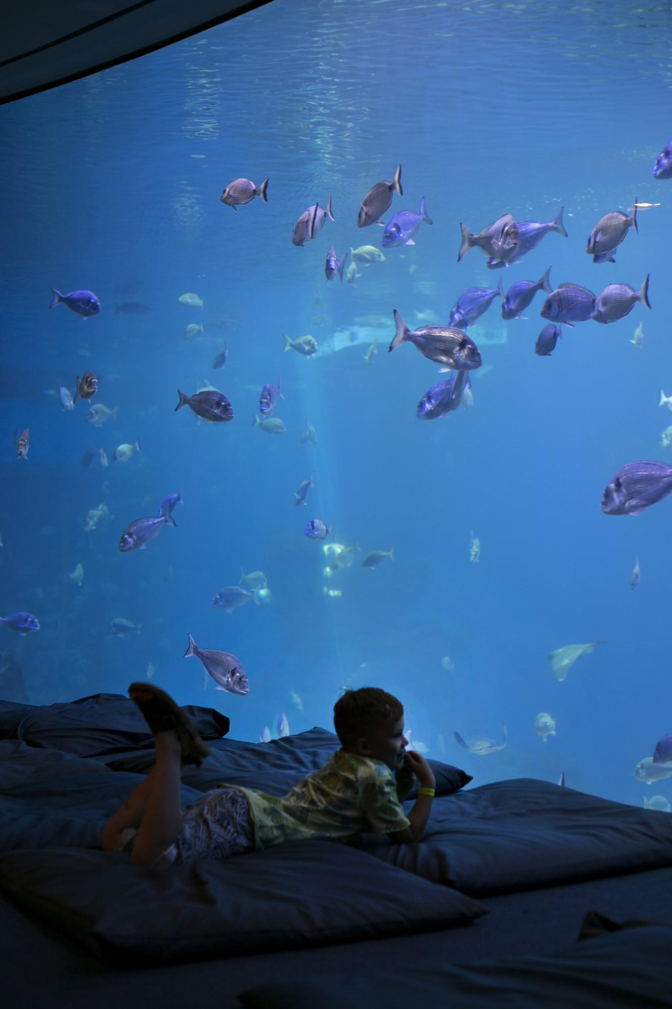 palma aquarium, mallorca akwarium, majorka akwarium