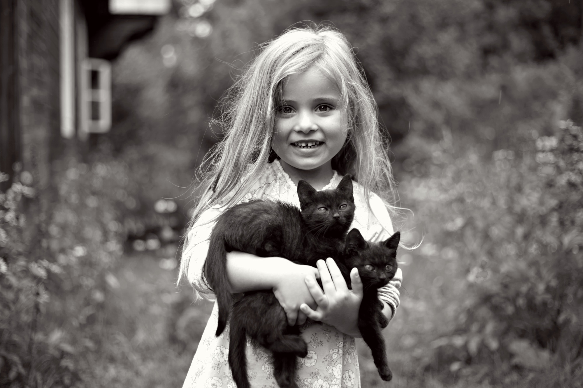World Photography Day, black cat