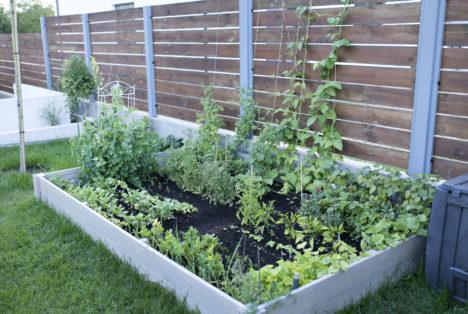Warzywniak w małym, miejskim ogrodzie, czyli warzywa z piaskownic 01