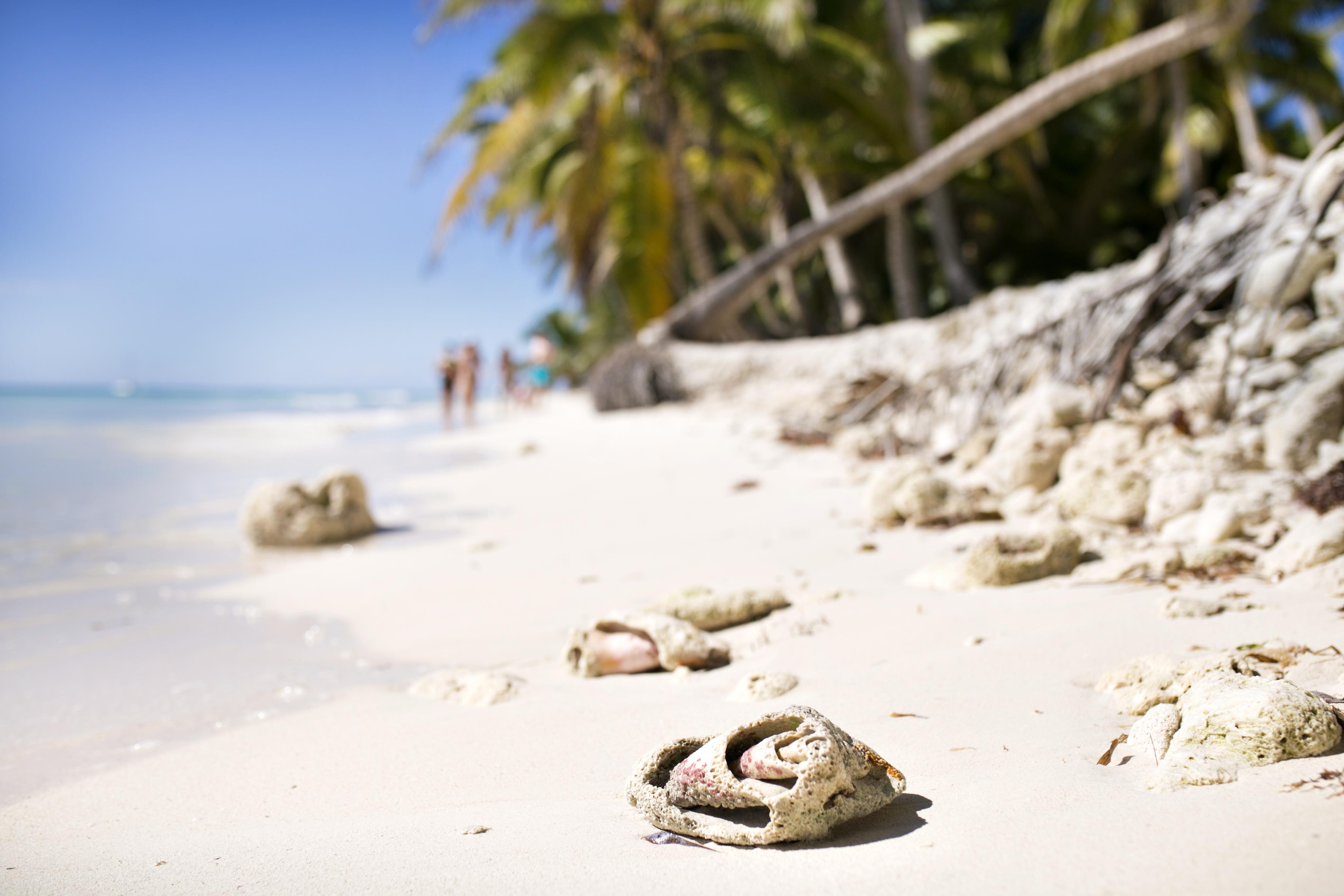 saona island, dominikana